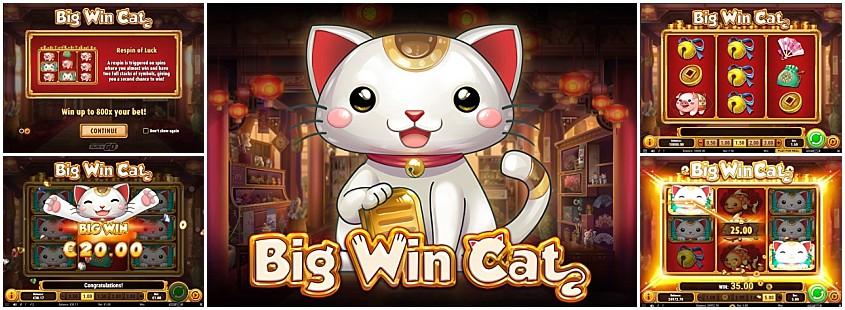 Bästa Big Win Cat 604026